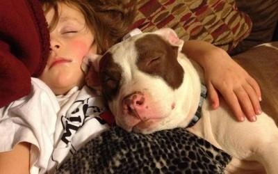 18-pitbull-cuddling